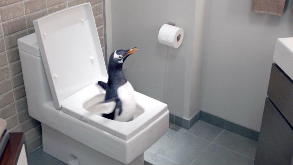 Кадр из трейлера фильма 'Пингвины мистера Поппера' с унитазом Duravit