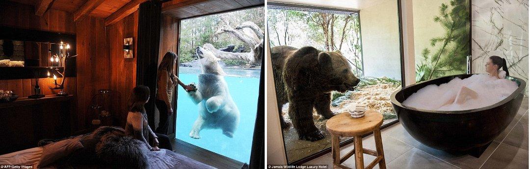 Интерьеры гостиничного номера в зоопарке (Zoo de La Flèche) во Франции и ванной комнаты в австралийском отеле Jamala WildLife Lodge